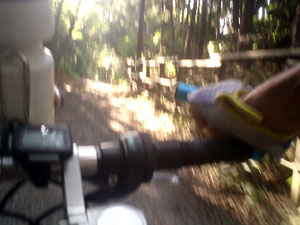 木漏れ日の狭山湖を走る