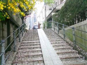 近くの階段。雨で桜の花びらが散り、上には黄色い知らない花が咲いてるという春のひとコマ。