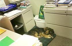 名前はソフィー。どっかの国のサッカー協会の犬と違って、陰口をたたかれてる様子は無い。
