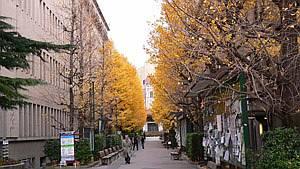 学校も木がきれい。