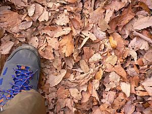 久しぶりにドライなので、落ち葉も乾燥してわしゃわしゃ。