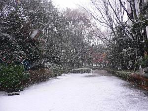 この雪の中、プリンタを担いで行くことに(笑)