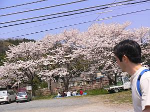 桜と駐車スペースがあれば、お花見スポット。
