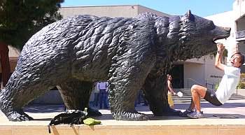 UCLAのクマはいまでもシンボル。