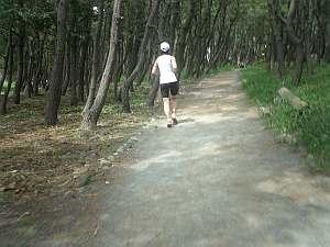 ランはこんな木陰を走って気持ちよし。