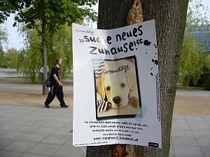 ドイツの迷子犬。