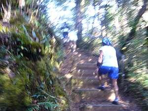 熱帯雨林の山の中。