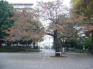 そろそろ紅葉の季節。被写体が増えて楽しみ。