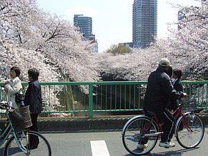面影橋の上は桜をめでる人がたくさん。