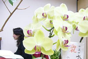 添付ファイルで送りたいということで、弁護士を後ろに据えて花を撮影。