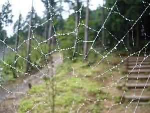 人が少ないので、クモも巣を作り放題。