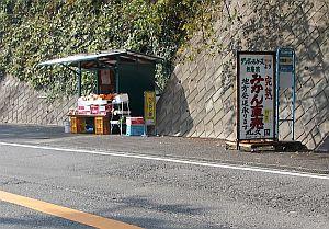 伊豆半島にくると、ミカン屋さんが増える。