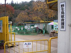 体育館の裏には動物園を発見。