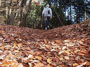 落ち葉が深くなってきた。足元が危ない危ない。