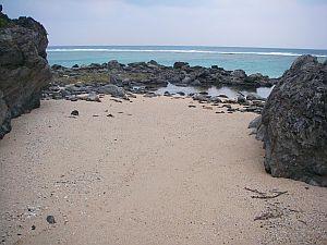 ネコの額ほどのビーチを発見。