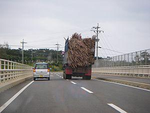 さとうきび満載のトラックがたくさん。