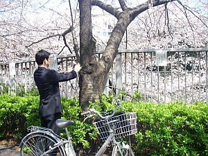 外回りのオジサンもチャリンコ停めて写真撮影。