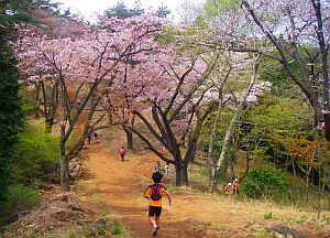 山頂近くは桜が満開+。
