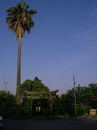 鳥居とヤシの木、不思議な組み合わせ。