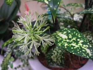 ウチの弁護士の部屋の花。一気に咲いたので、写真係として撮影(笑)