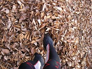 落ち葉で埋まるトレイルもあった。