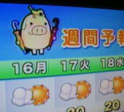 天気が気になる朝、カワイイ豚さんを発見。