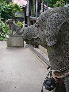 狛犬がフツーの犬。