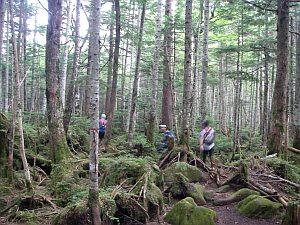 踏み荒らされていない苔いっぱいの林。