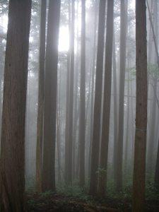 霧なために幻想的。