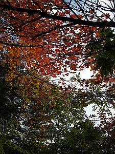 秋は紅葉が綺麗らしい。