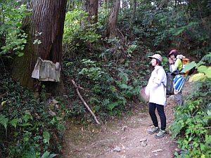 七福神が飾ってある大木の麓。