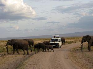 ゾウもたくさん。ホテルの庭にも現れた。