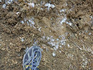 霜も各所に見られた。