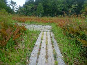 木道は以外と走りにくい。
