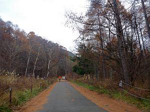 秋っポイ風景も多し。