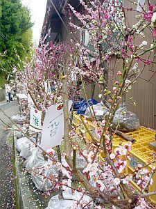 咲いてるのは苗木だけ(>_<)