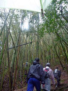 竹林にやってきた。