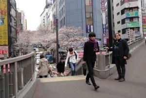 街中でみる桜。