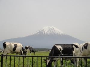 富士山見放題。