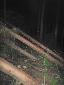 倒木が多かった。
