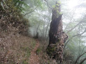たまに深い霧が出て幻想的に。