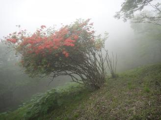 この先霧が立ち込めて幻想的になる。