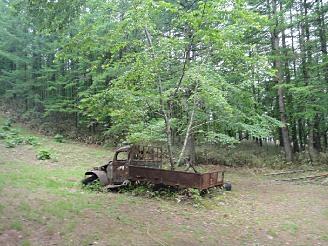 トラックの木を発見!