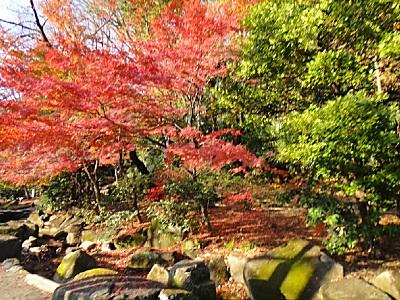 江戸川橋の紅葉は今が見頃(笑)