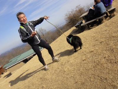 犬の散歩がトレーニング