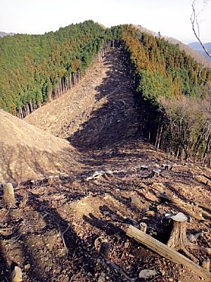 大規模伐採してあるところ。