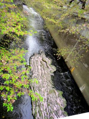 桜の花びらが大量に流れる神田川。