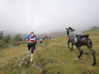 馬と一緒に走る。