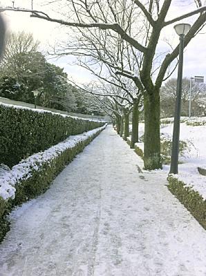 皇居の歩道がトレイルになっとる