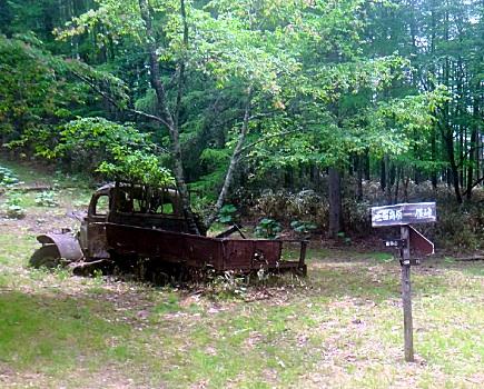 トラックの木は今日も健在。